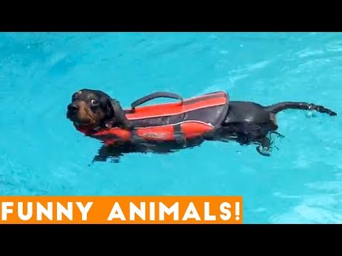 Funny animals - Funniest Pets & Animals of the Week Compilation December 2018  Funny Pet Videos