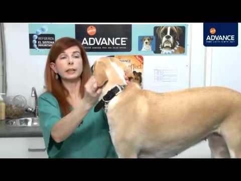 Perros: Señales de enfermedad