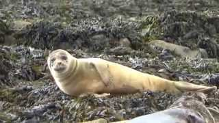 Kenmare Ireland  city photos gallery : Seafari Boat Tour In Kenmare Ireland Seals Sea & More