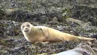 Kenmare Ireland  City pictures : Seafari Boat Tour In Kenmare Ireland Seals Sea & More