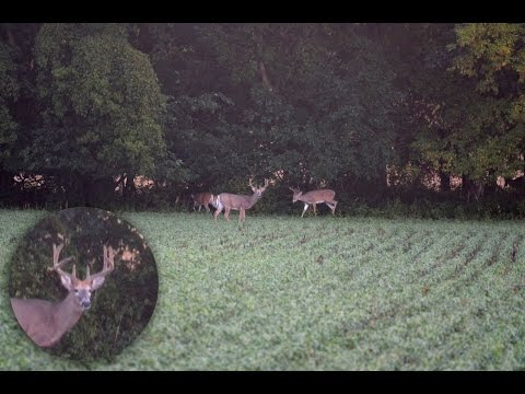 Deer Spotting: Pre-season Scouting for White-tailed Deer