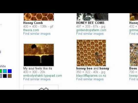 Beekeeping Guide for Beginners