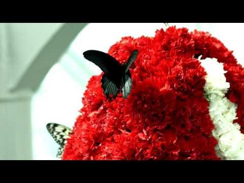 Konya Tropikal Kelebek Bahçesi - 2