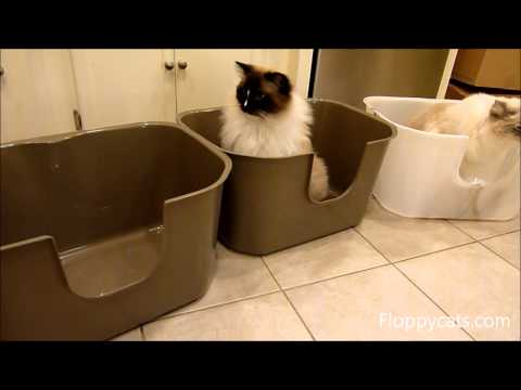 0 NVR Miss Litter Box Review