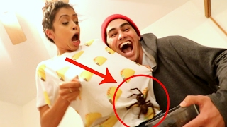 Download Youtube: TARANTULA WOULD NOT GET OFF MY GIRLFRIEND!!