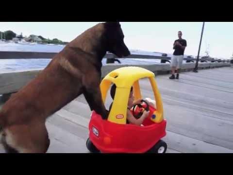 Không khỏi nhịn cười trước cảnh chó đẩy xe cho em bé