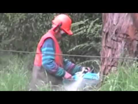 Remote Controlled Logging Winch - WOMBAT
