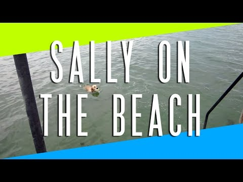 SALLY ON THE BEACH (6.11.14 - Day 1317)