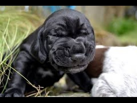 Funny sneezing dogs – Animal compilation