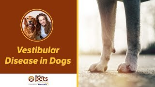 Vestibular Disease in Dogs
