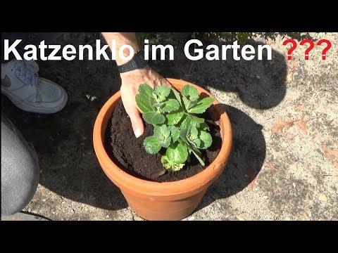 Coleus Canin Hilfe gegen Katzenkot im Garten Katzen im Garten Katzenabwehr