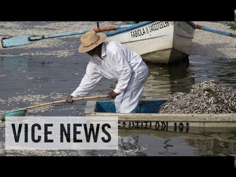 VICE News Daily%3A Beyond The Headlines - September 3%2C  2014