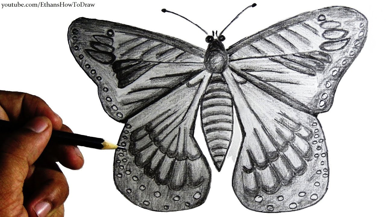 How To Draw A Butterfly For Kids Step By Step Pencil Drawing With Narration  #howtodraw Hibiscus Flower Drawing Step By Step