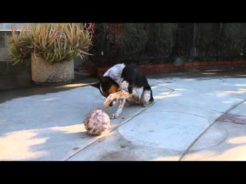 Smartest Dog In The World – Jumpy 123 trick