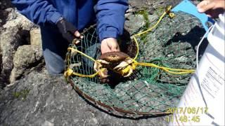 crabbing a  Dungeoness & Red Crab at Bodega Bay