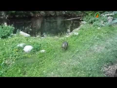 Preview video Le Lontre del Centro Visita