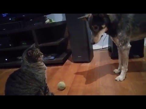 il-gatto-il-cane-e-la-pallina