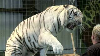 How to tame lions and tigers full download video download mp3 download music download