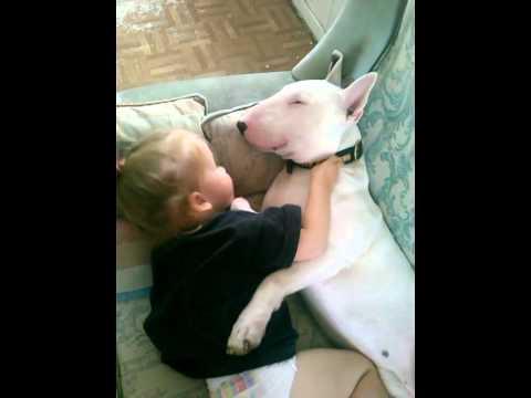scene d'amore fra un bimbo e un bull terrier! tenerissimi!