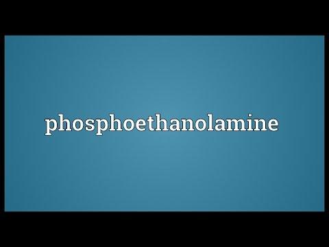 Phosphoethanolamine Meaning