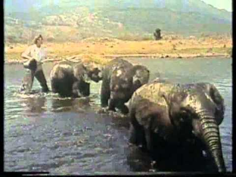 The Fabulous Echoes - Baby Elephant Walk видео
