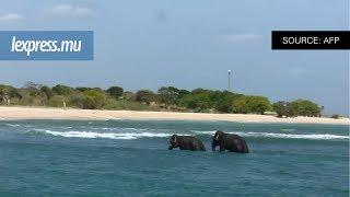 Deux jeunes éléphants ont été sauvés de la noyade dimanche 23 juillet 2017 par la marine du Sri Lanka alors qu'ils se trouvaient en eaux profondes, à un ...