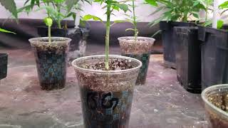Medical Marijuana Garden by Medically Fit
