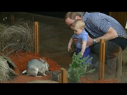 Will's - Prince William and Kate have attended an Easter service in Australia before taking the royal baby, Prince George, to Taronga Zoo, where he met a Bilby.