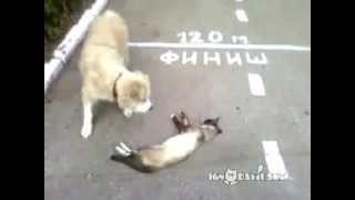 Kot zauważył psa i natychmiast udał, że nie żyje. To, co działo się dalej, podbiło internet.