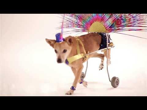 Cachorrinha imita 'Globeleza' para promover adoção de animais com deficiência