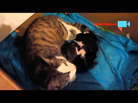 Koťátka den po narození