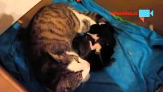 ROZTOMILOST NADEVŠE: První dny života malých koťátek