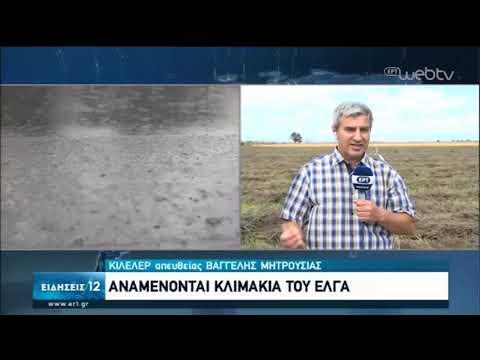 Κιλελέρ : Ζημιές σε καλλιέργειες απο τη χαλαζόπτωση   11/06/2020   ΕΡΤ