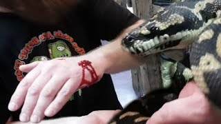 ERIC GETS A NASTY SNAKE BITE JUST TO EARN A BEEF STICK!!!   BRIAN BARCZYK by Brian Barczyk