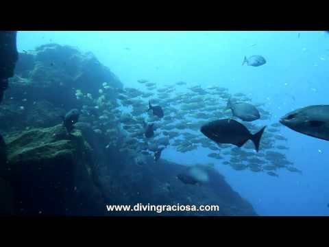 Buceo Azores - Isla Graciosa