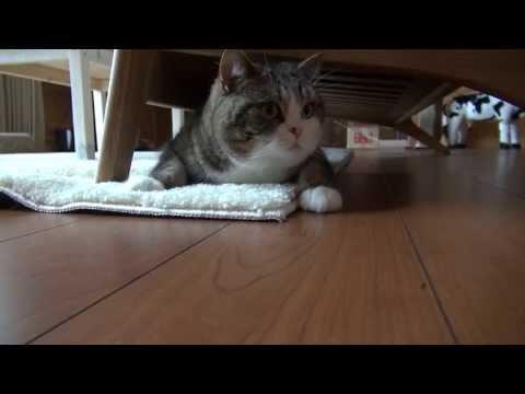 El Gato Maru juega bajo el sofá