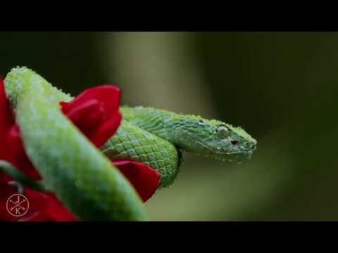 КОСТА-РИКА В 4K 60fps Ultra HD, Freefly Movi (видео)