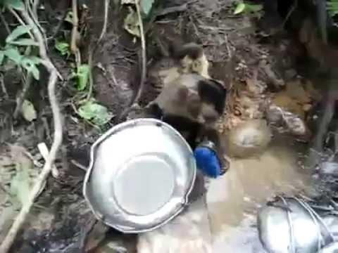 Amazing monkey washing up