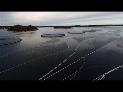 A salmon aquaculture farm in Norway