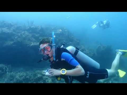 Dive Carriacou   Where the reefs are full of life