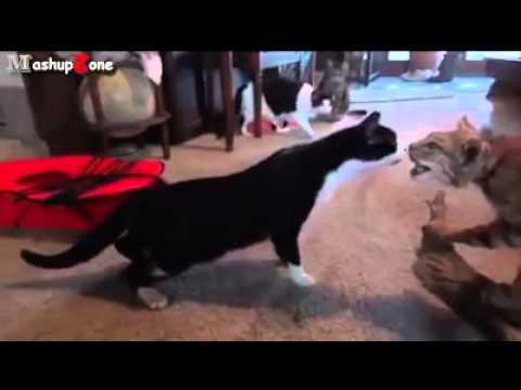 gatti che distruggono la casa: divertente!