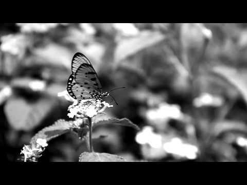 Video Editing (Mumbai- The spirited city)