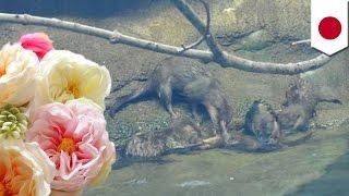 いったい何が!?動物園のカワウソが溺れ死ぬ