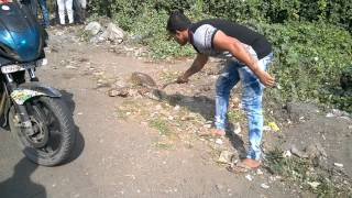 Thane India  city photos gallery : Indian Python caught @ Godbunder Road, Thane Maharashtra