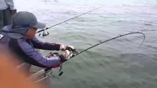 Video Mancing Ikan Jenahak Terbesar MP3, 3GP, MP4, WEBM, AVI, FLV Januari 2018