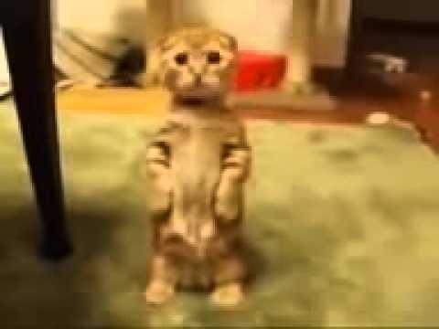 un gattino tenerissimo e bellissimo