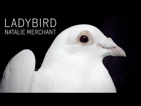 LadybirdLadybird