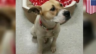 NIESAMOWITE! Pies przywiązany do słupa odgryza sobie łapę by się uwolnić!