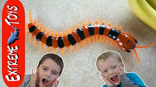 Sinister Centipede Toy Insect Terror! Giant Bug Toy Chases Ethan and Cole.