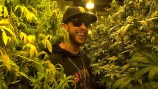 Grow Op Tour: Green & Healthy Wellness by The Cannabis Connoisseur Connection 420